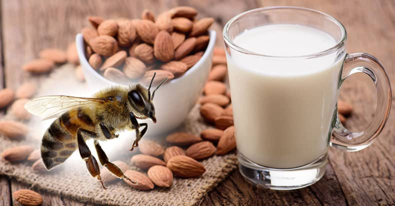 Is almond milk vegan or does it kill bees